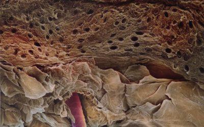 ¿Es cierto que la piel se está renovando continuamente?